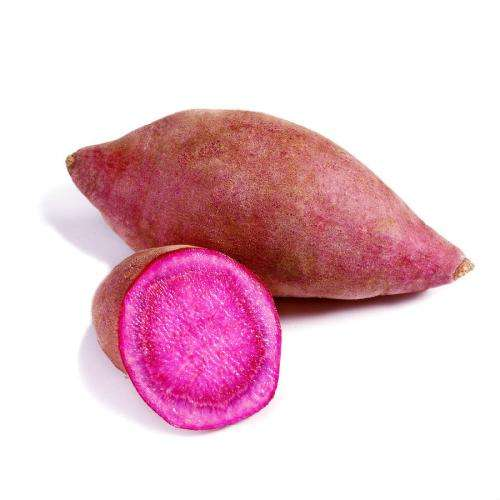 High quality fresh organic purple sweet potatoes for health
