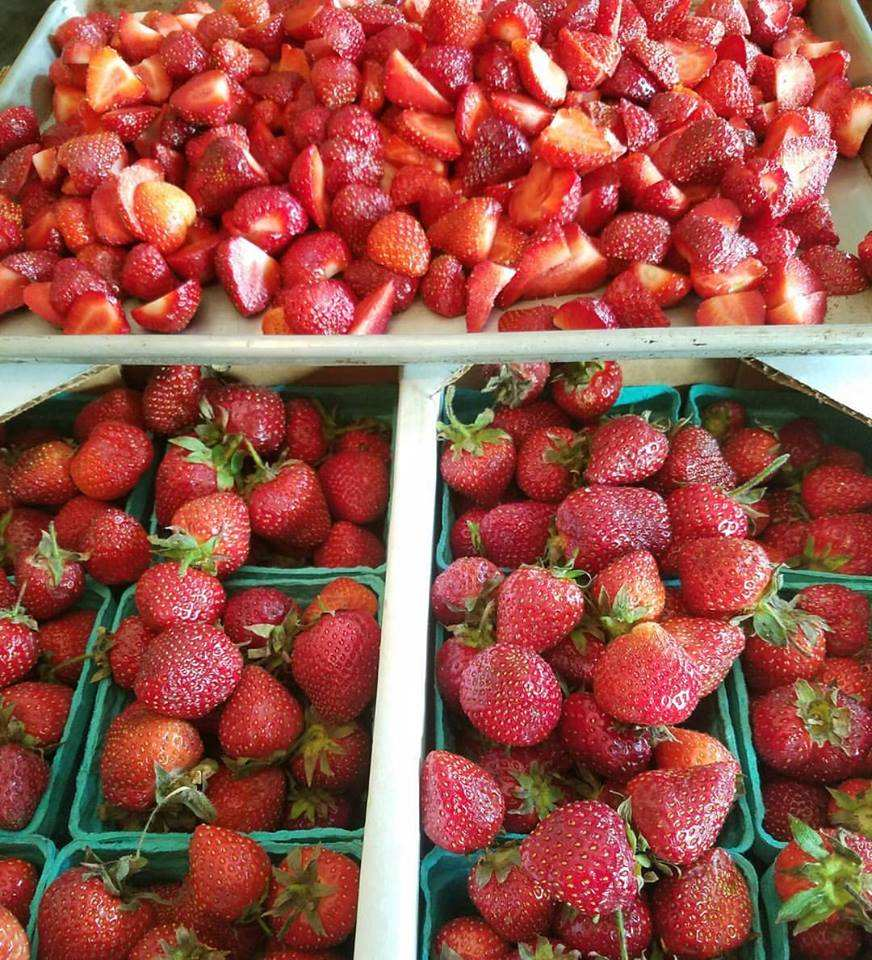 All Fresh Strawberry From South Africa Ready For Export