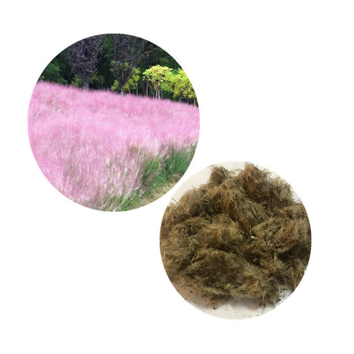Bulk dried flowers pampas grass seeds pampasgrass seeds for planting