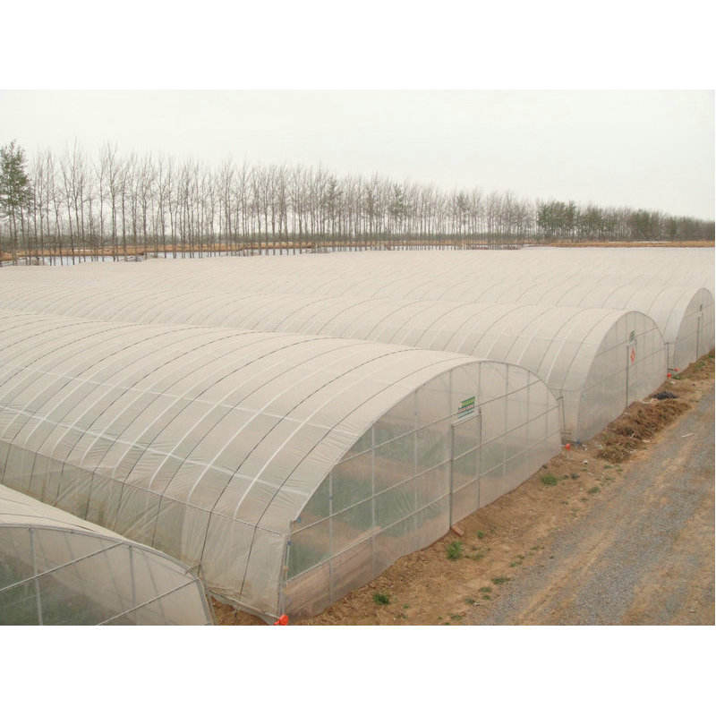 solar greenhouse commercial used hydroponics greenhouse made in China