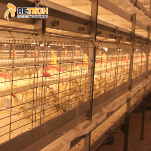 Hot Dip Galvanized Broiler Chicken Farm 5000 Birds H Frame Multi Tiers Poultry Broiler Cage for Sale