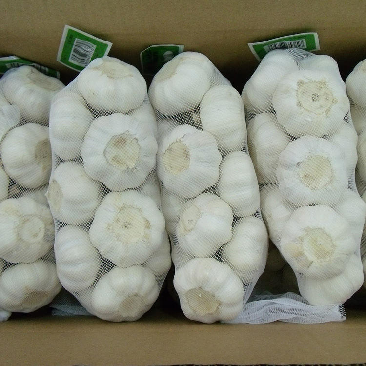Factory Sale Various China Price 2020 Selling Garlic Wholesale