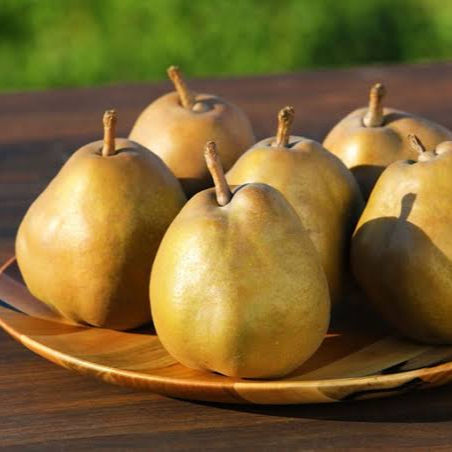 High quality Japan Fresh Pear Fresh fruit For Wholesale