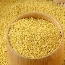 Natural Fresh Food Grade Yellow Millet (FOXTAIL) for Human and Bird Food