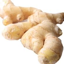 Bulk Chinese Mature Fresh Ginger