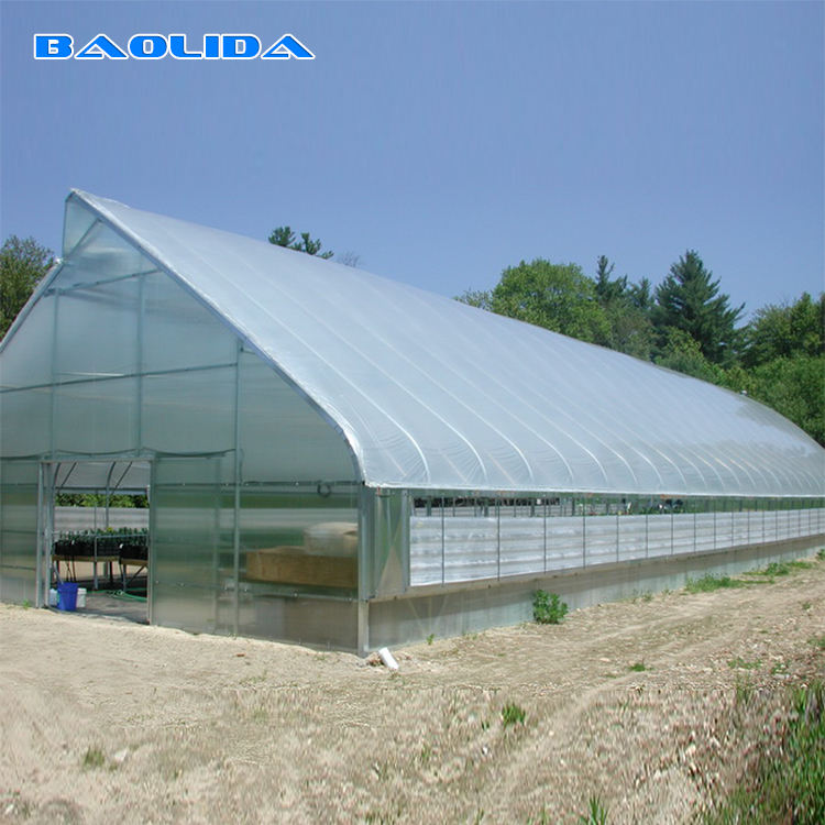 Tropical Tunnel Plastic Greenhouse With Roof Vents