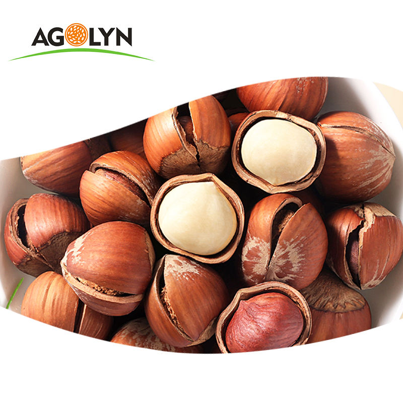 Nice snack Natural palatable Dried raw Hazelnuts In Shell