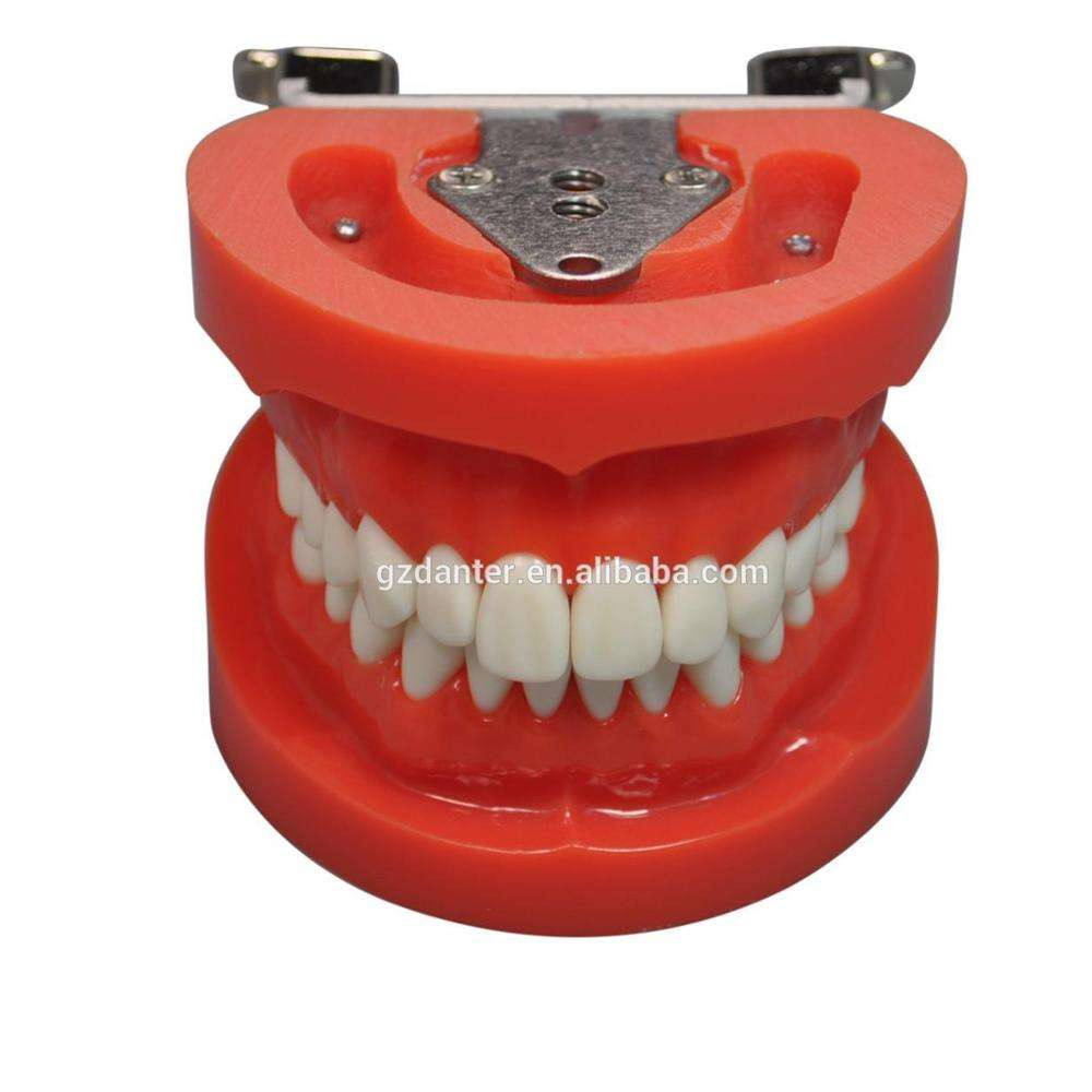 New design replacement practice teeth Nissin dental teeth model for practicing