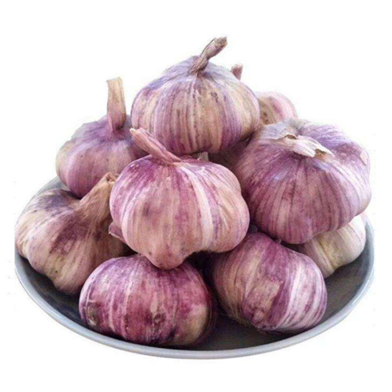 fresh garlic purple garlic packing for mesh bag or carton kenya import garlic from china