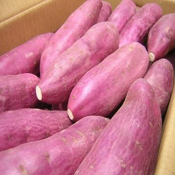 Fresh sweet potato with high protein/incredible quality/for import 2020