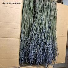 wholesale the  100% ture dried lavender flowers with good smell