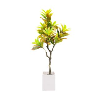 Beautiful Croton Plant To Enhance Your Spaces Alibaba Com