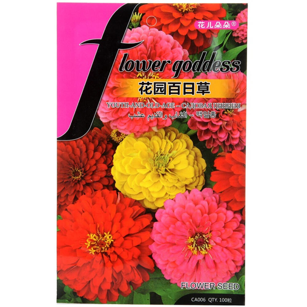 Touchhealthy Supply Garden Scenery Flower Hundred Dahlias Seeds for Sowing