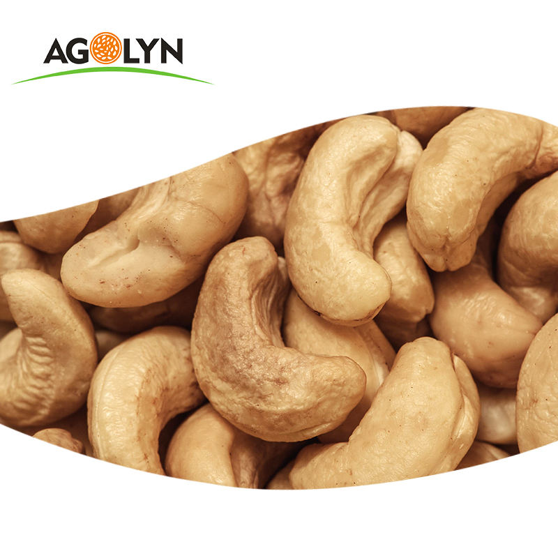 Top level roasted salty organic processed cashew nut