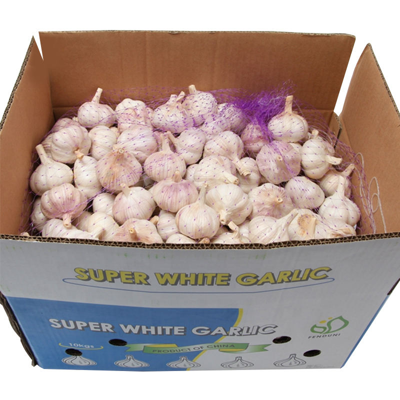 Fresh garlic per ton price / Garlic Fresh AJO