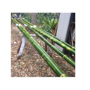 Raw Bamboo Poles from Vietnam! Large Bamboo Poles for Garden and Building