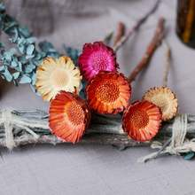 Import most popular dried flower African sunflowers for home decoration