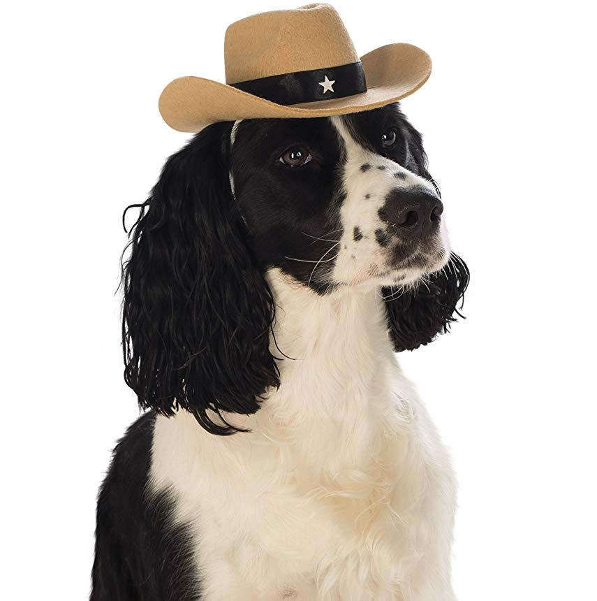 Amazon explosion pet supplies hat dog accessories cowboy hat cross-border direct supply spot pet supplies dog hat cowboy