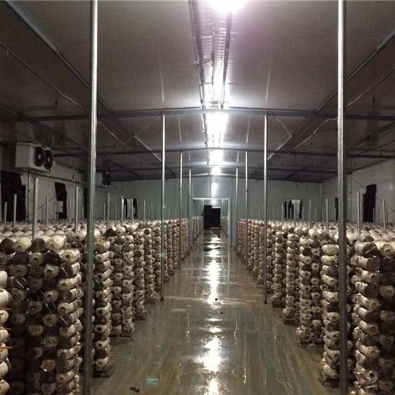 DETAN mass product only cultivting shiitake mushroom spawn bags/logs/spawns yearly supply(offer online technical guidance)