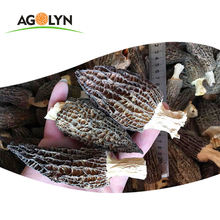 AGOLYN high quality Cultivated black morel mushroom