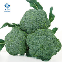 2020 High Quality Fresh Vegetable Fresh Broccoli