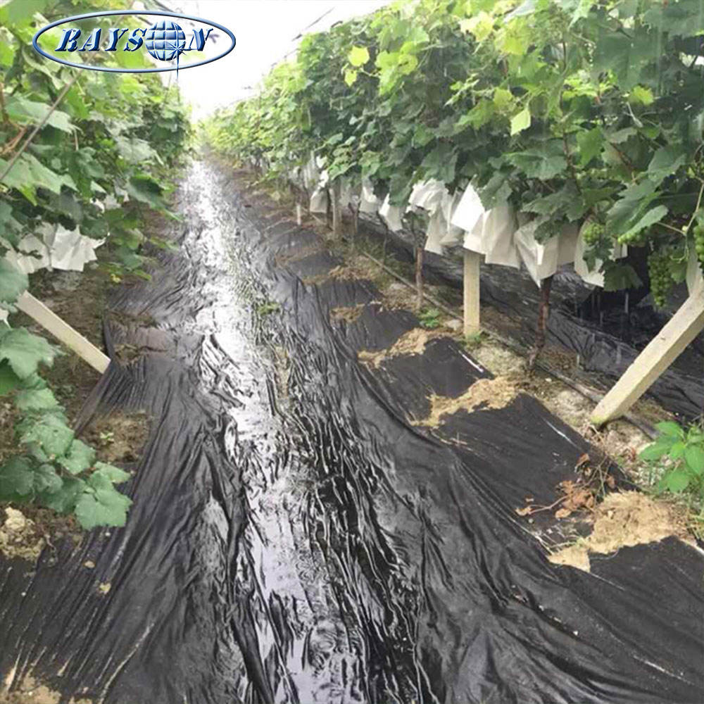 Weed Fabric Foshan Black Pp Weed Control Non Woven Fabric Biodegradable Pp Nonwoven Fabric Ground Cover For Agriculture