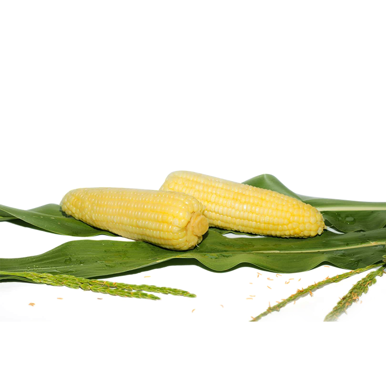 Hot Selling Yellow Dry Zucker <span class=keywords><strong>mais</strong></span> Essen gekocht Iqf Frozen Fresh Corn On Cob