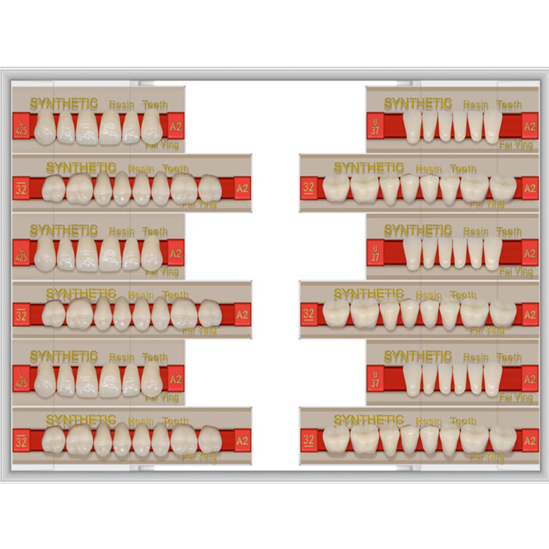 Factory Dental Acrylic false 2 Layer Artificial Teeth with FDA CE ISO