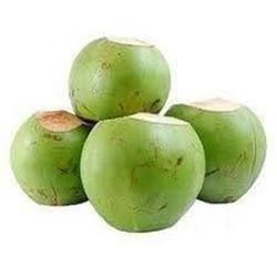 Low price young Green Fresh Coconut From India