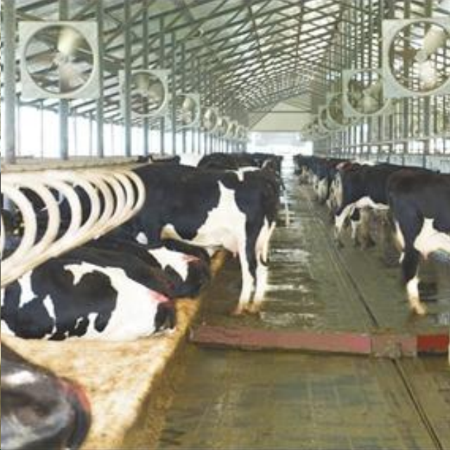 Dairy Farm Equipment Increasing Lying Time Single Cow Free Cattle Stalls