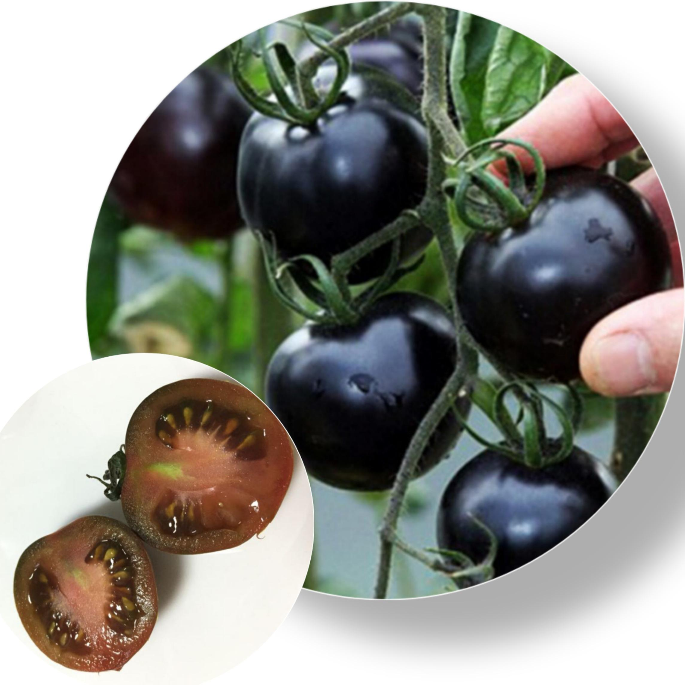 2020 Wholesale Top Quality Black Tomato Seeds Black Pearl No. 1