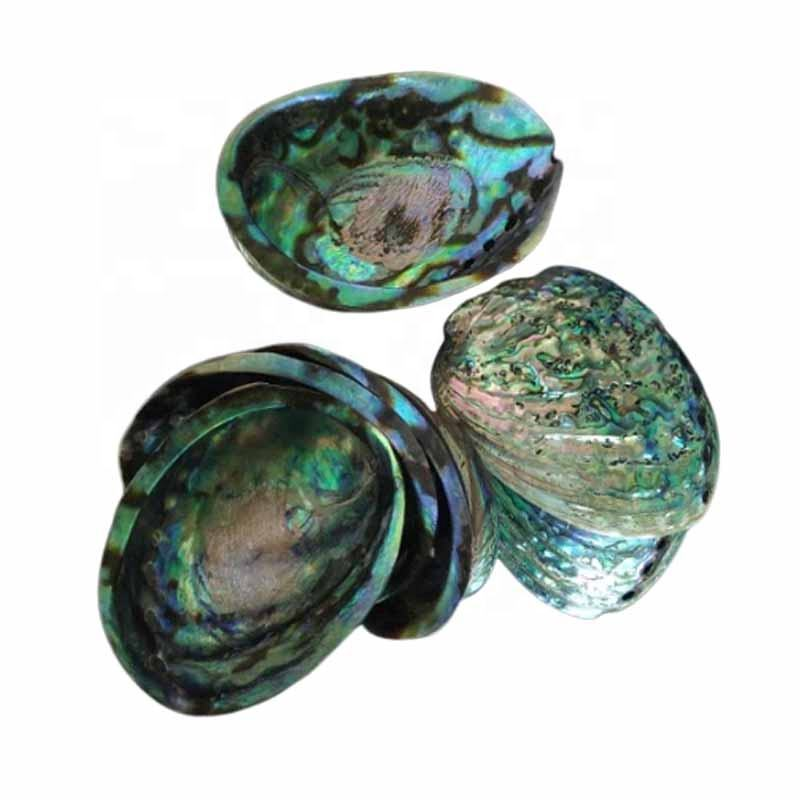 Factory Direct Price Abalone Shells for Smudging Natural Seashell Home Blessing & Cleansing Start
