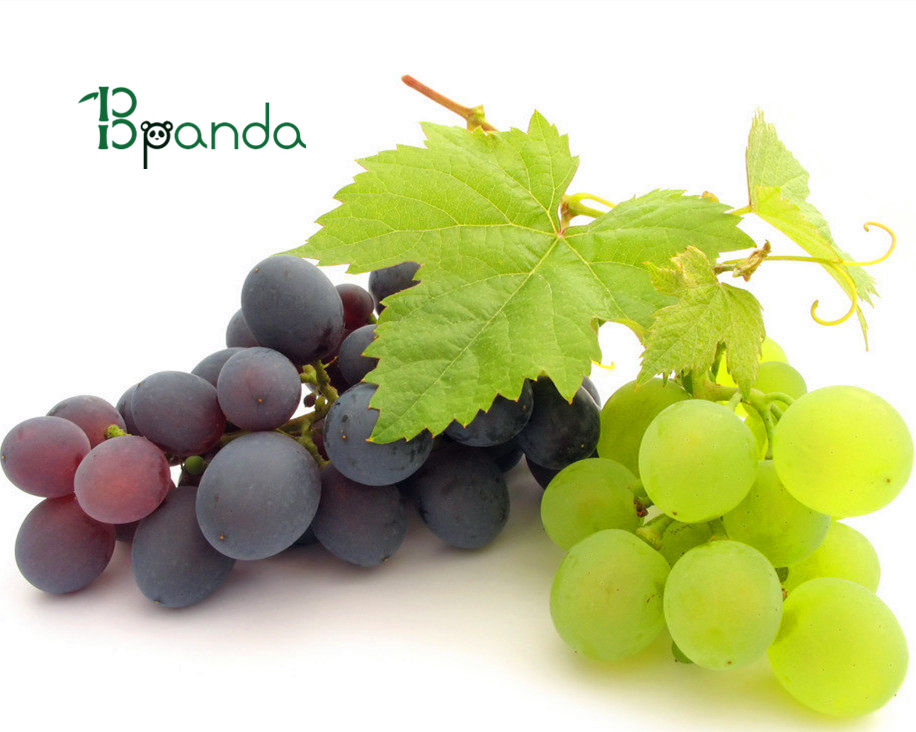 High purity 95% proanthocyanidins Grape seed extract