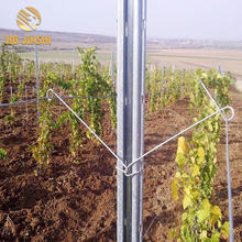 Hot dipped galvanized vineyard trellis post use for Adelaid market