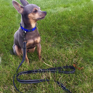 Retractable Safety Long Adjustable Heavy Duty Elastic Durable Hands Free Nylon Bungee Dog Leash