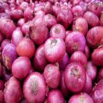 lowest price fresh red onion/yellow onion/white onion