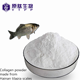 protein manufacturer water soluble halal fish irganic collagen peptide powder for healthy supplement