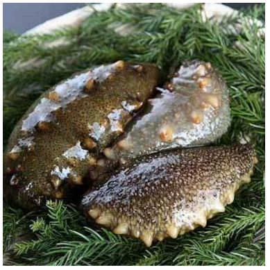 Japan sea cucumber high protein for sale