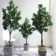 Wholesale Factory Direct Sale Artificial Peperomia tetraphylla Plants Best Quality Green Plastic tree