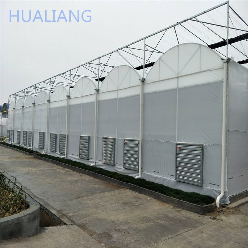 large size multi-span arch plastic film Greenhouse tomato greenhouse and strawberry greenhouse turnkey project