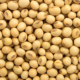 New Crop High Protein Yellow Cheap Bulk Soybean With High Quality For Sales