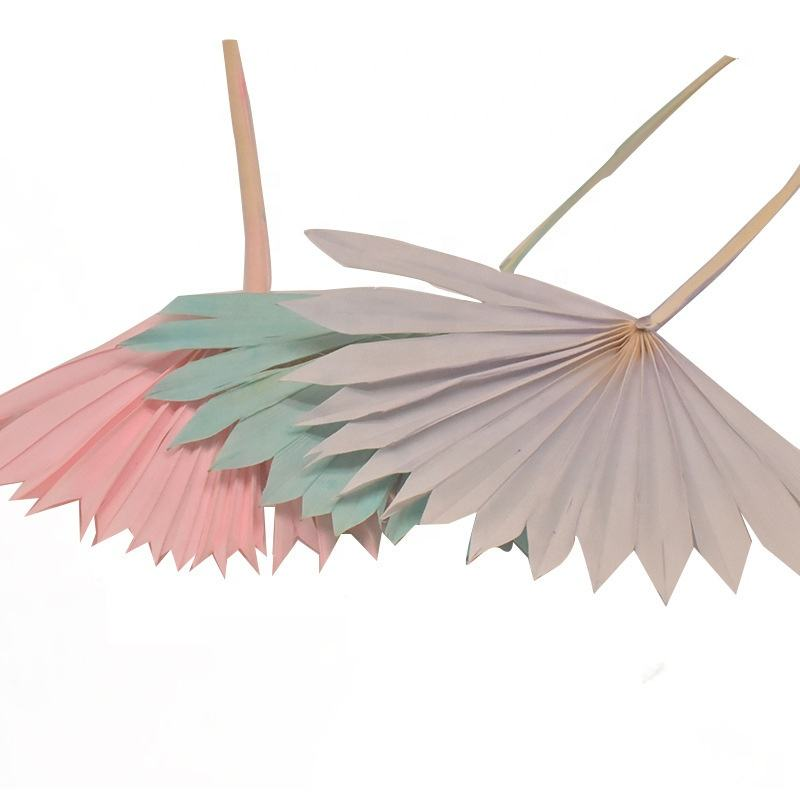 Bleached Sun Palm Dried Flower Bouquet Small Palm Spear Stems Natural Preserved Palm Fan for Wedding