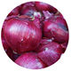 Hot sale 2020 harvest quality Chinese vegetable hybrid red onion seeds