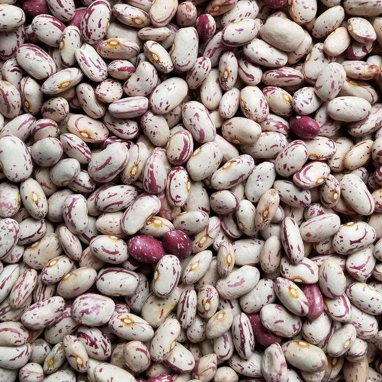 Cheap Price American Round Light Speckled Kidney Bean