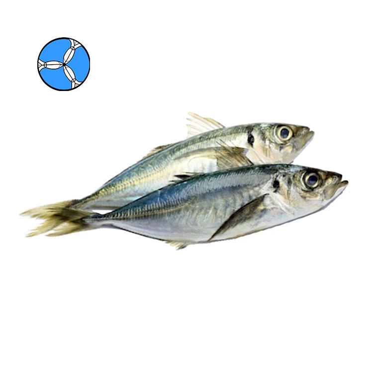 SANFENG SEAFOOD Frozen Horse Mackerel Frozen Fish For Thai Round Scad Export