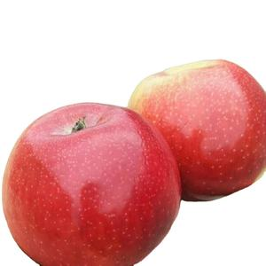 China Wholesale High Quality Fresh Competitive Price Red Fuji fresh Apple