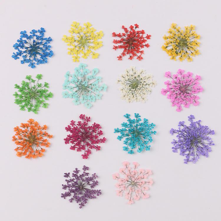 100 pçs/saco Minóica Laço Real Pressionado Flores Secas Pressionado Flores Secas Naturais Para A <span class=keywords><strong>Resina</strong></span>