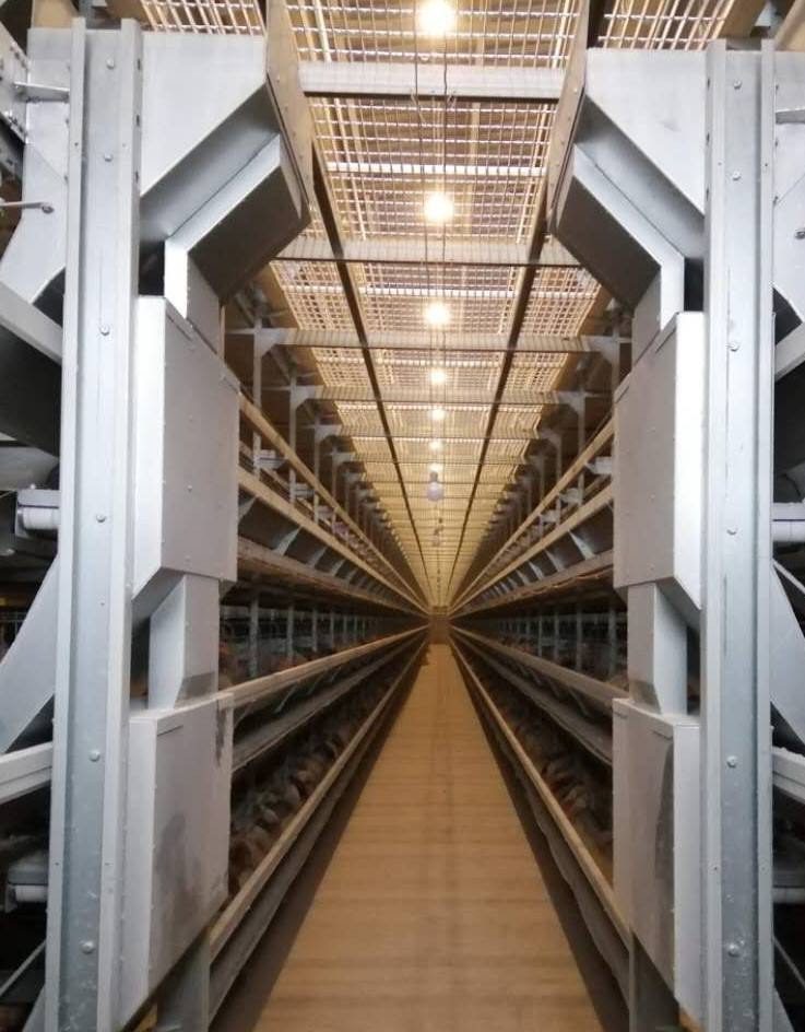 automatic system factory price animalcages poultry farm chicken layer cage cages chicken poultry equipment