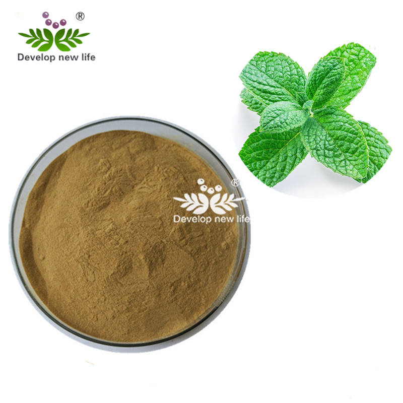 Herba Menthae Heplocalyci Peppermint Leaf Extract Powder