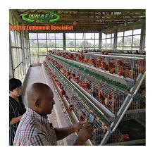 alibaba china batteries laying hens